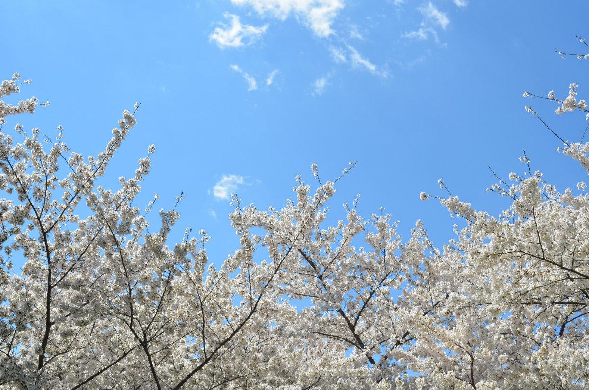 Keycafe Spring Staging